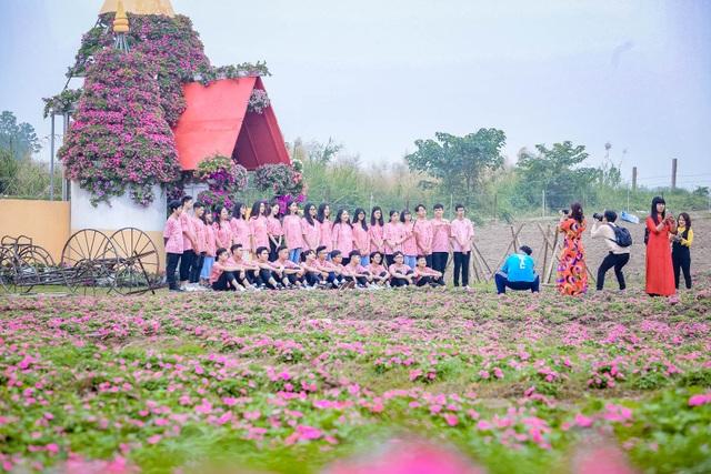 Đồi hoa ngọc thảo hồng đẹp như tranh vẽ tại Hà Nội - 11