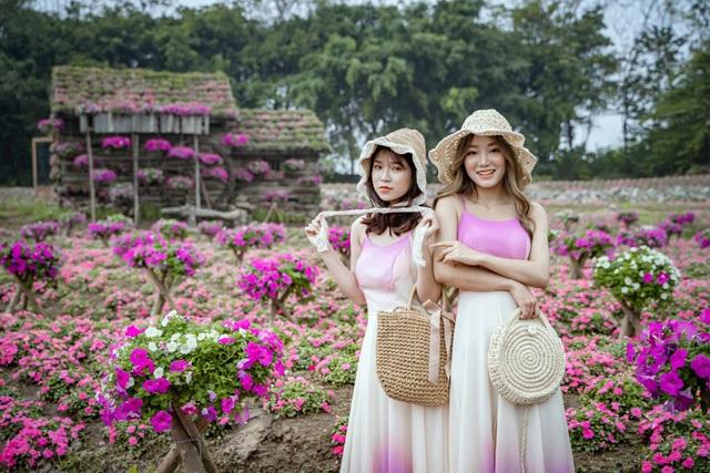 Đồi hoa ngọc thảo hồng đẹp như tranh vẽ tại Hà Nội - 5