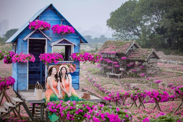 Đồi hoa ngọc thảo hồng đẹp như tranh vẽ tại Hà Nội - 6