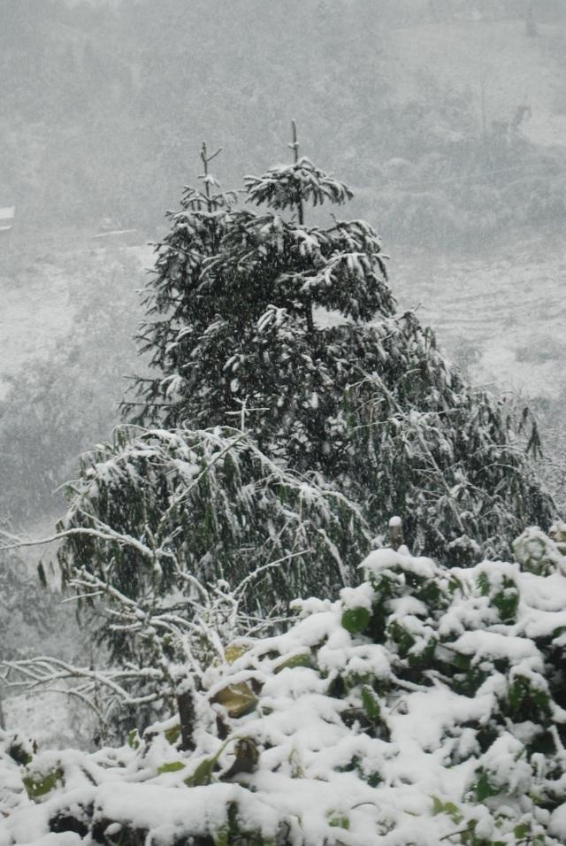 Đỉnh Fansipan có thể đón mưa tuyết dịp Tết Dương lịch - 1