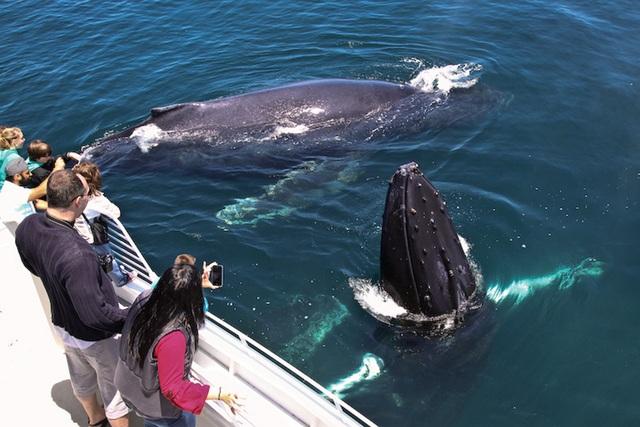 Đâu là eo biển bị gắn mác khu vực tử thần với loài cá voi? - 4