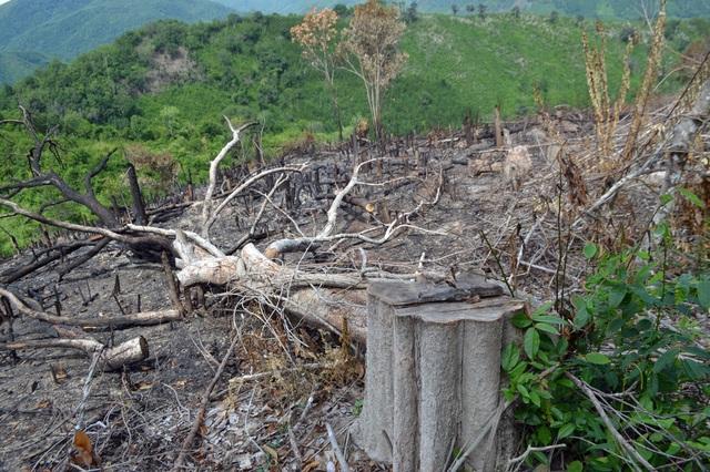 6 lãnh đạo xã bị kỷ luật đảng vì để rừng bị cạo trọc tại Phú Yên - 2