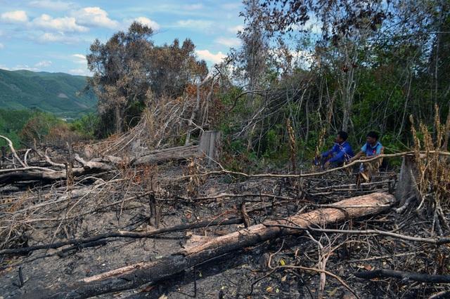 6 lãnh đạo xã bị kỷ luật đảng vì để rừng bị cạo trọc tại Phú Yên - 1