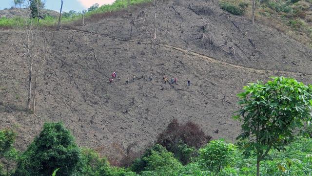 6 lãnh đạo xã bị kỷ luật đảng vì để rừng bị cạo trọc tại Phú Yên - 4