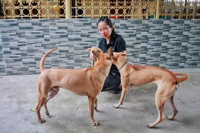 Chiêm ngưỡng 3 chú chó Phú Quốc độc nhất Việt Nam có tổng giá trị gần 1 tỷ đồng - 2