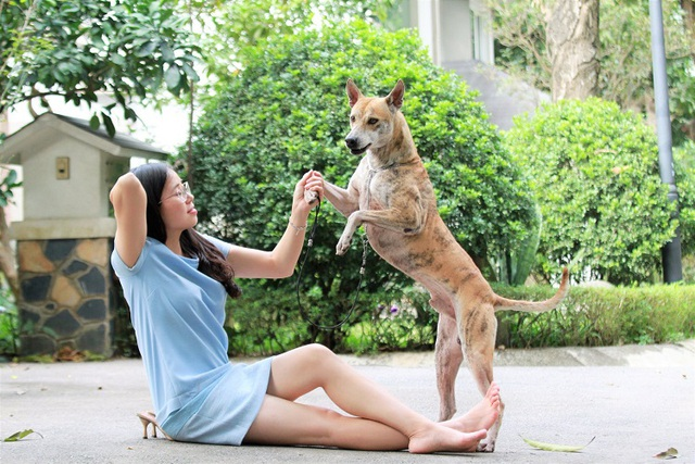 Chiêm ngưỡng 3 chú chó Phú Quốc độc nhất Việt Nam có tổng giá trị gần 1 tỷ đồng - 4