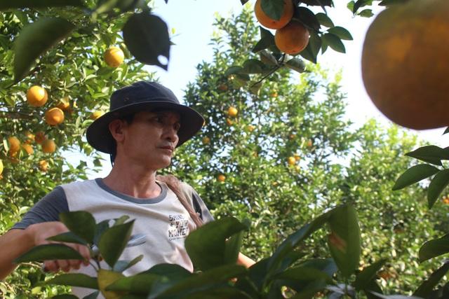 Thu tiền tỷ nhờ mạnh dạn trồng cam trên đất phong hóa - 3