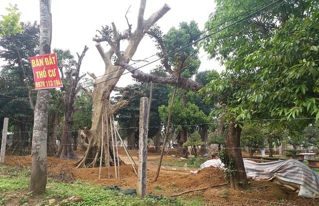 Thị trường bất động sản Hà Nội năm 2020: Đất nền lên ngôi - 2