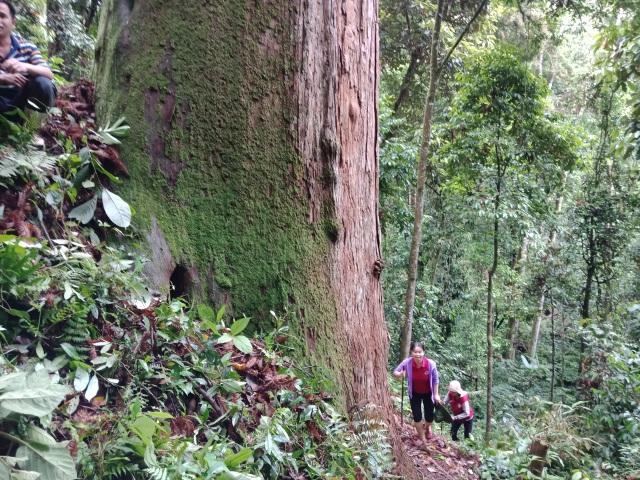 Nữ PGS trẻ tuổi nhất VN 2020: Giảng viên tuổi hổ đam mê bất tận về rừng - 5