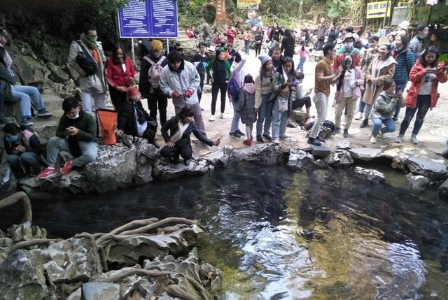 Hàng nghìn du khách chen chân đổ về suối cá thần cầu may dịp đầu năm mới - 6