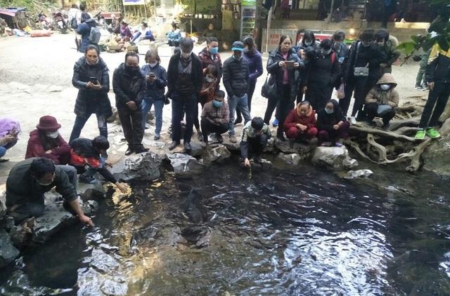 Hàng nghìn du khách chen chân đổ về suối cá thần cầu may dịp đầu năm mới - 3