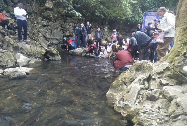 Hàng nghìn du khách chen chân đổ về suối cá thần cầu may dịp đầu năm mới - 4