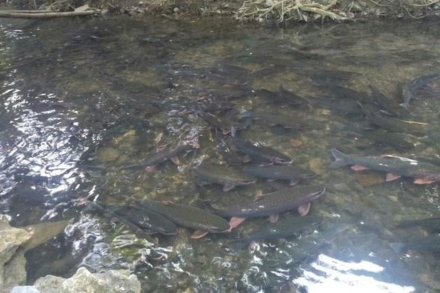 Hàng nghìn du khách chen chân đổ về suối cá thần cầu may dịp đầu năm mới - 1