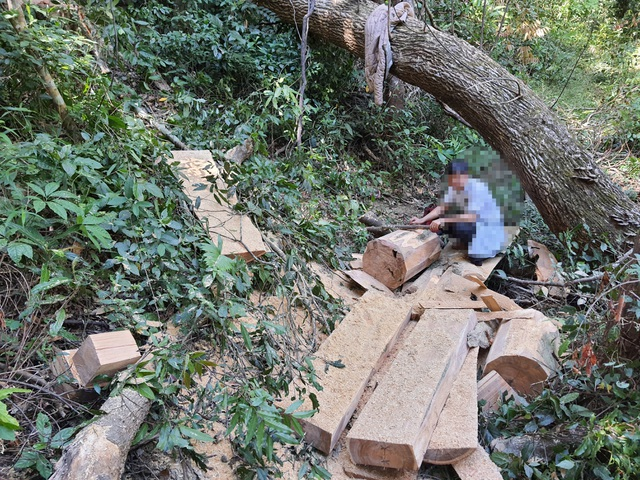 Bàng hoàng cả đoàn xe độ chế rầm rập tiến vào phá nát rừng xanh Tây Nguyên - 1