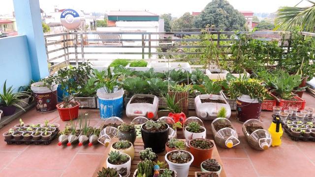 Mẹ đảm vác 2 tạ đất, gom ve chai lên sân thượng làm khu vườn ngập rau trái - 2