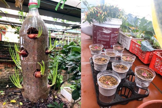 Mẹ đảm vác 2 tạ đất, gom ve chai lên sân thượng làm khu vườn ngập rau trái - 3