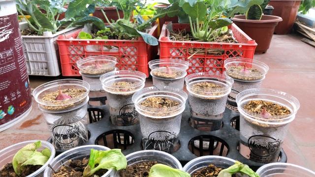 Mẹ đảm vác 2 tạ đất, gom ve chai lên sân thượng làm khu vườn ngập rau trái - 4