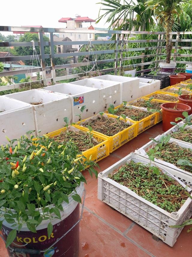 Mẹ đảm vác 2 tạ đất, gom ve chai lên sân thượng làm khu vườn ngập rau trái - 6