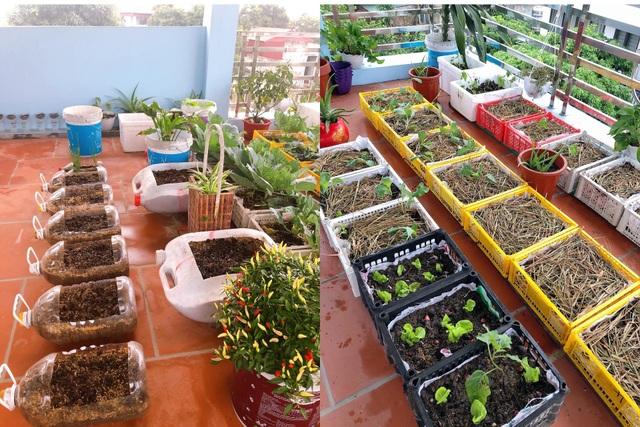 Mẹ đảm vác 2 tạ đất, gom ve chai lên sân thượng làm khu vườn ngập rau trái - 7