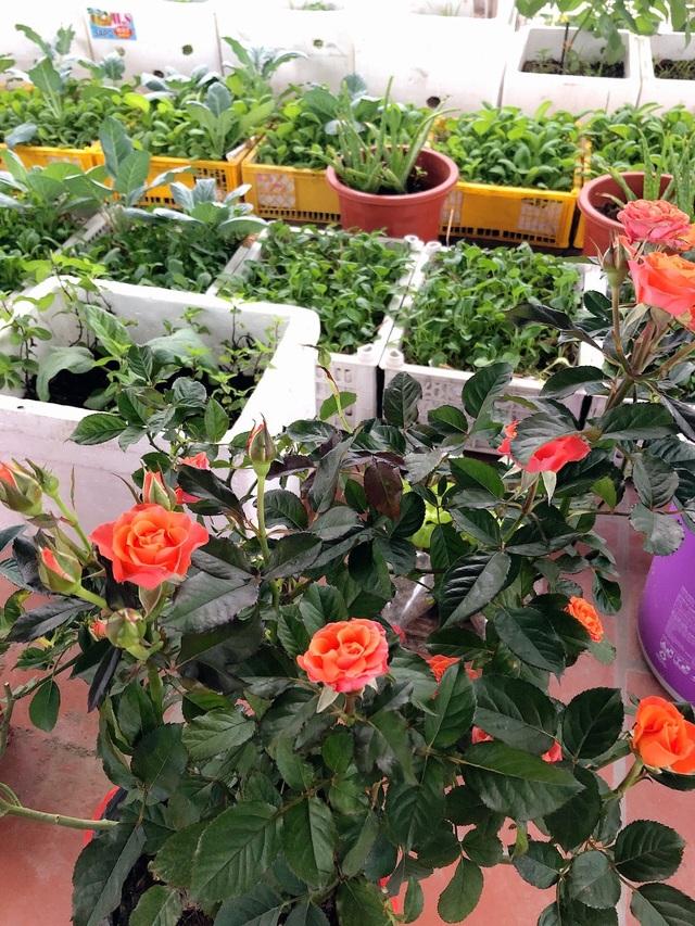 Mẹ đảm vác 2 tạ đất, gom ve chai lên sân thượng làm khu vườn ngập rau trái - 9