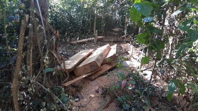 Bàng hoàng cả đoàn xe độ chế rầm rập tiến vào phá nát rừng xanh Tây Nguyên - 4