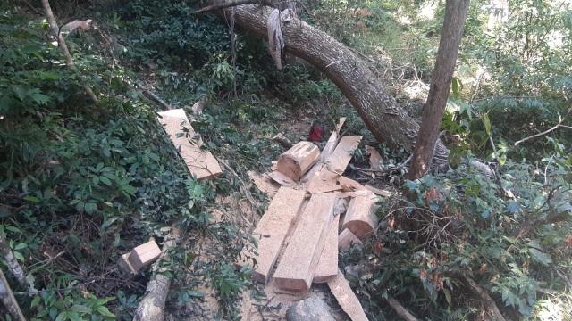 Bàng hoàng cả đoàn xe độ chế rầm rập tiến vào phá nát rừng xanh Tây Nguyên - 2