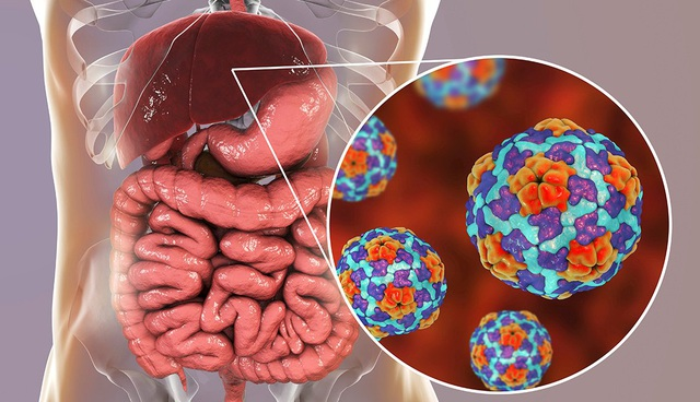 Những loại virus viêm gan nào có thể lây truyền qua đường tiêu hóa? - 1