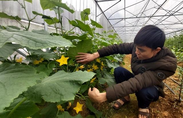 Nam thanh niên người Thái làm giàu từ đất, thu gần nửa tỷ đồng mỗi năm - 6