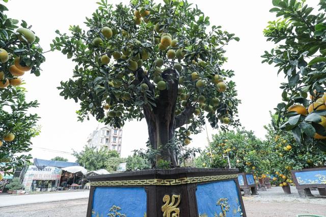 Chiêm ngưỡng bưởi siêu độc dáng làng giá 200 triệu ở Hưng Yên - 3