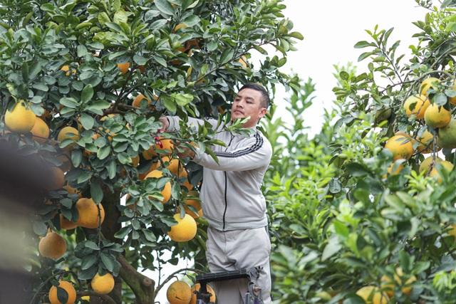 Chiêm ngưỡng bưởi siêu độc dáng làng giá 200 triệu ở Hưng Yên - 5