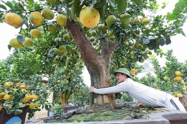 Chiêm ngưỡng bưởi siêu độc dáng làng giá 200 triệu ở Hưng Yên - 2