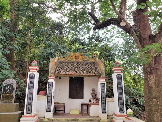 Quần thể lim xanh 600 năm ở ngôi đền cổ được gìn giữ như báu vật - 2