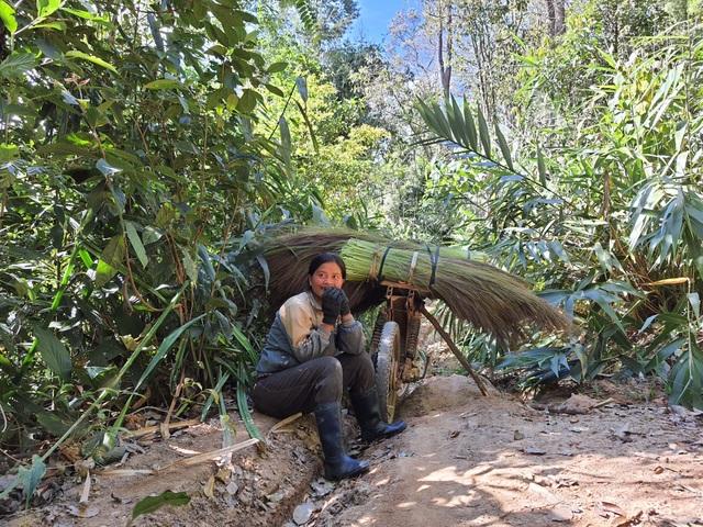 Người dân băng rừng đi hái lộc trời những ngày đầu năm - 2