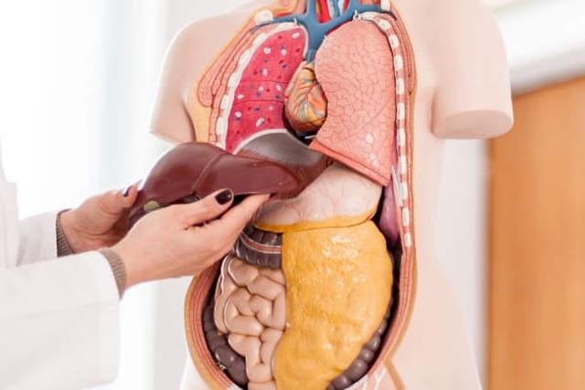 Vì sao gan của chúng ta lại bị nhiễm độc? - 1
