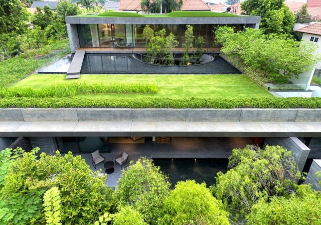 Cặp đôi đổ đất trồng cây xanh như công viên trên sân thượng biệt thự phố - 2