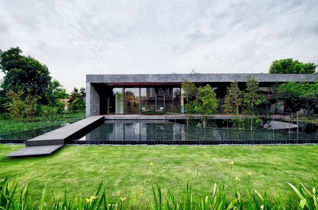 Cặp đôi đổ đất trồng cây xanh như công viên trên sân thượng biệt thự phố - 5