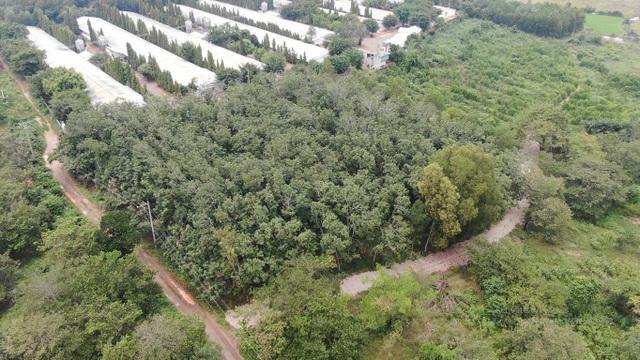 Đầu cơ đất sân bay Long Thành: Cẩn trọng ham rẻ dính đất dự án - 4