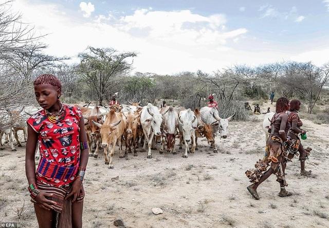 Lạ lùng bộ tộc đàn ông phải khỏa thân nhảy qua lưng bò để... lấy được vợ - 2