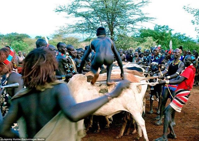 Lạ lùng bộ tộc đàn ông phải khỏa thân nhảy qua lưng bò để... lấy được vợ - 3