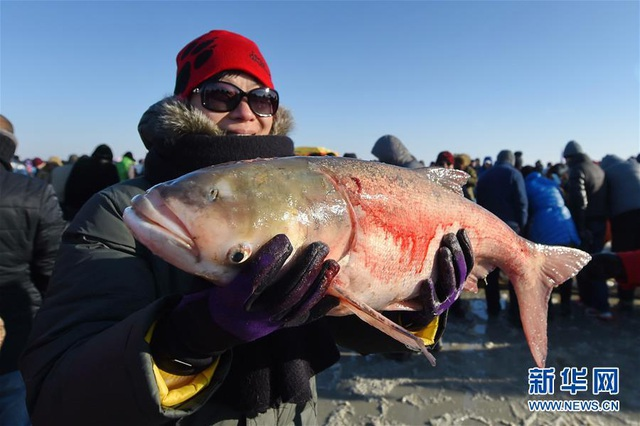 Bội thu gần 500 tấn cá dưới hồ dù nhiệt độ hạ sâu xuống mức -26 độ C - 5
