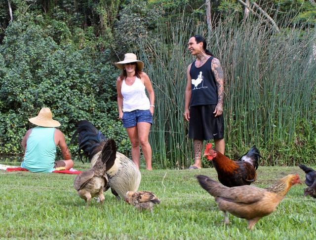 Nơi hàng nghìn con gà hoang thản nhiên đi lại khắp nơi không lo bị bắt giết - 5