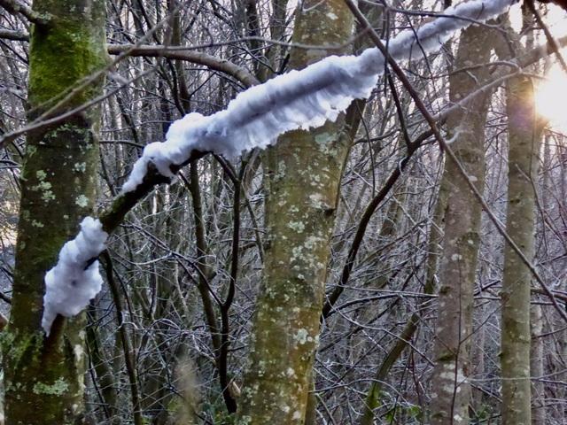 Băng tóc ma quái xuất hiện trong rừng ở Ireland - 2