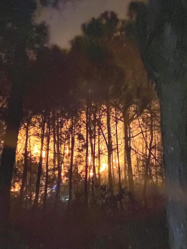 Nghệ An: Cháy rừng thông 20 năm tuổi - 1