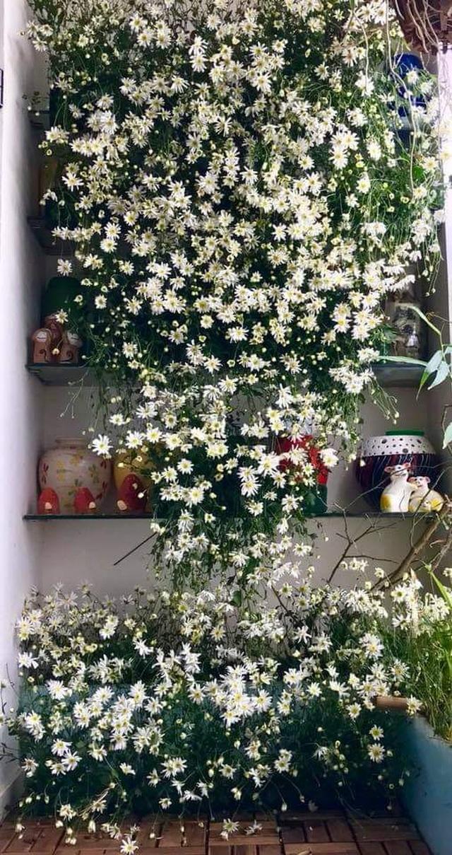Vườn hoa khổng lồ trên sân thượng của người phụ nữ Hà Nội - 11