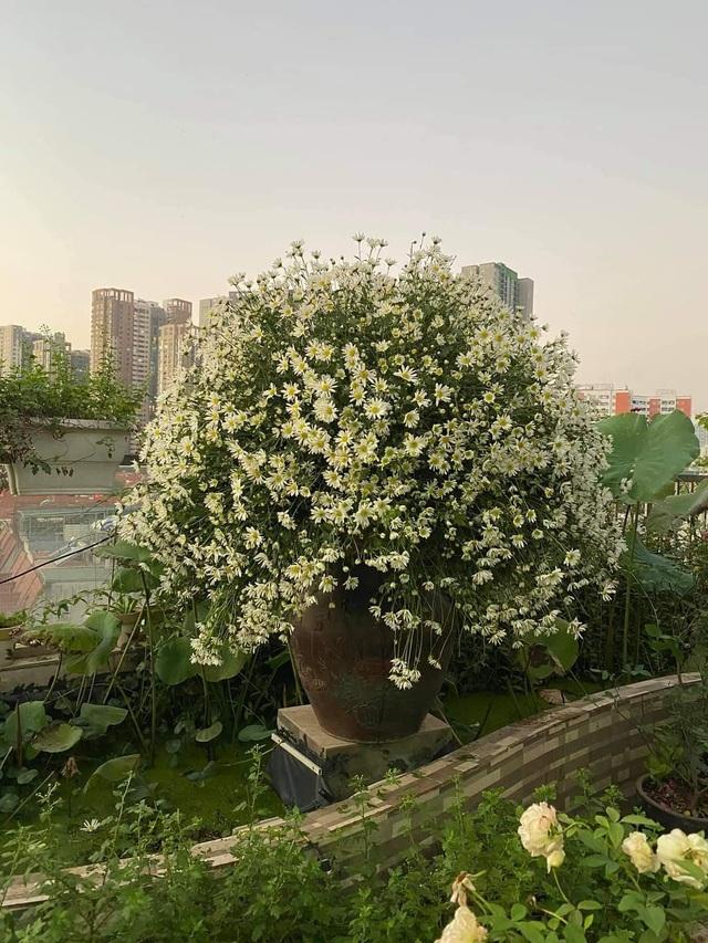 Vườn hoa khổng lồ trên sân thượng của người phụ nữ Hà Nội - 8