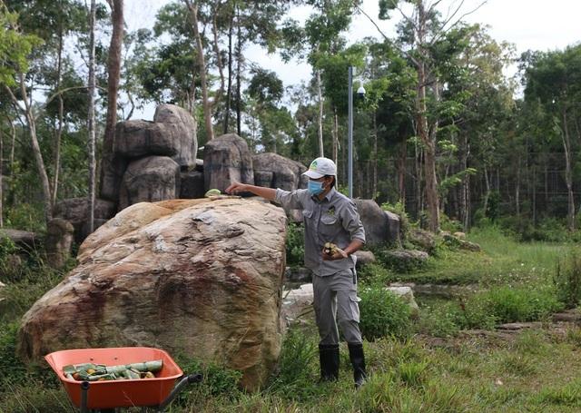 Những bảo mẫu thầm lặng tại Vinpearl Safari - 4