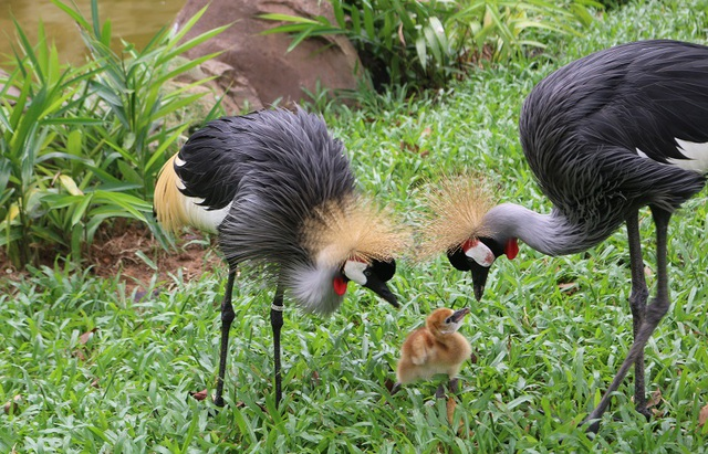 Những bảo mẫu thầm lặng tại Vinpearl Safari - 5