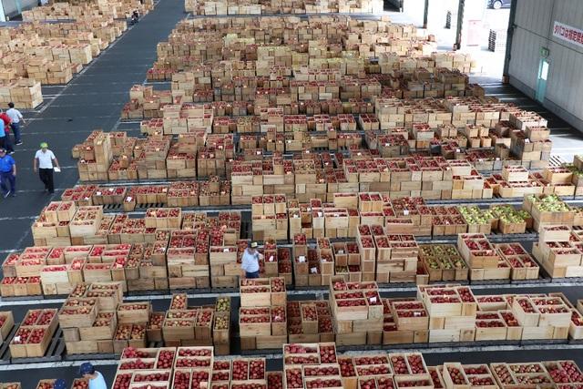 Cơ hội thưởng thức táo Nhật thượng hạng tại Việt Nam chỉ trong 3 tháng! - 1