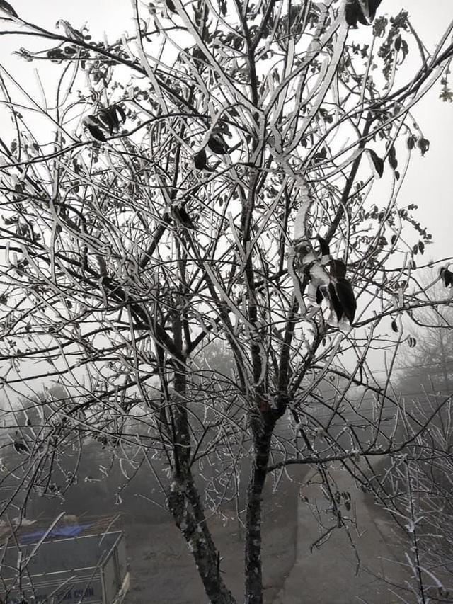 Sa Pa đông cứng trong băng tuyết, đỉnh Khau Phạ cũng hóa đá - 10