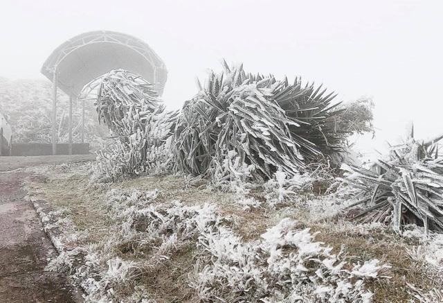 Sa Pa đông cứng trong băng tuyết, đỉnh Khau Phạ cũng hóa đá - 5